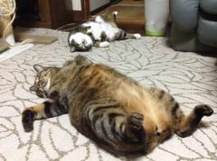 2匹の怠け者