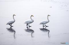 薄氷を踏む