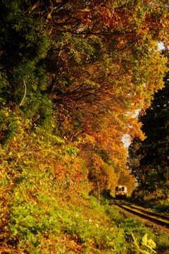 晩秋を走る