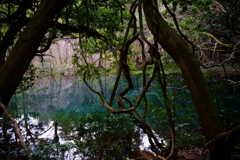 神の宿る池