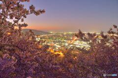 夜明けの桜と街明かり