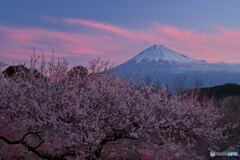 朝焼け富士に梅匂う