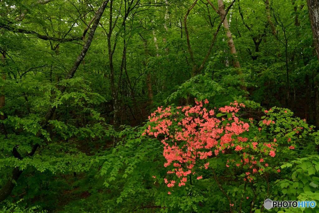 緑の森に咲く