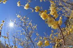 冬陽に華やぐ