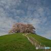 春への階段