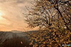 早春の彩の国