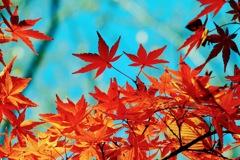 紅葉 その2