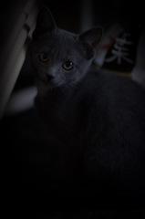 暗い写真は好きじゃないけれど、なぜかお似合い。