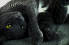 巨大化け猫