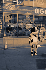哀愁の牛。