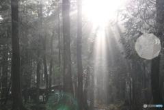 日本には森がある