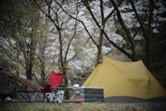 桜キャンプ