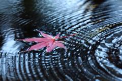 紅葉と波紋