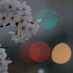 赤青黄色 桜色