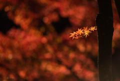 たかが秋 されど秋