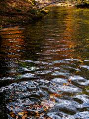 水と落ち葉のコンチェルト
