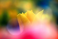 華麗な花畑