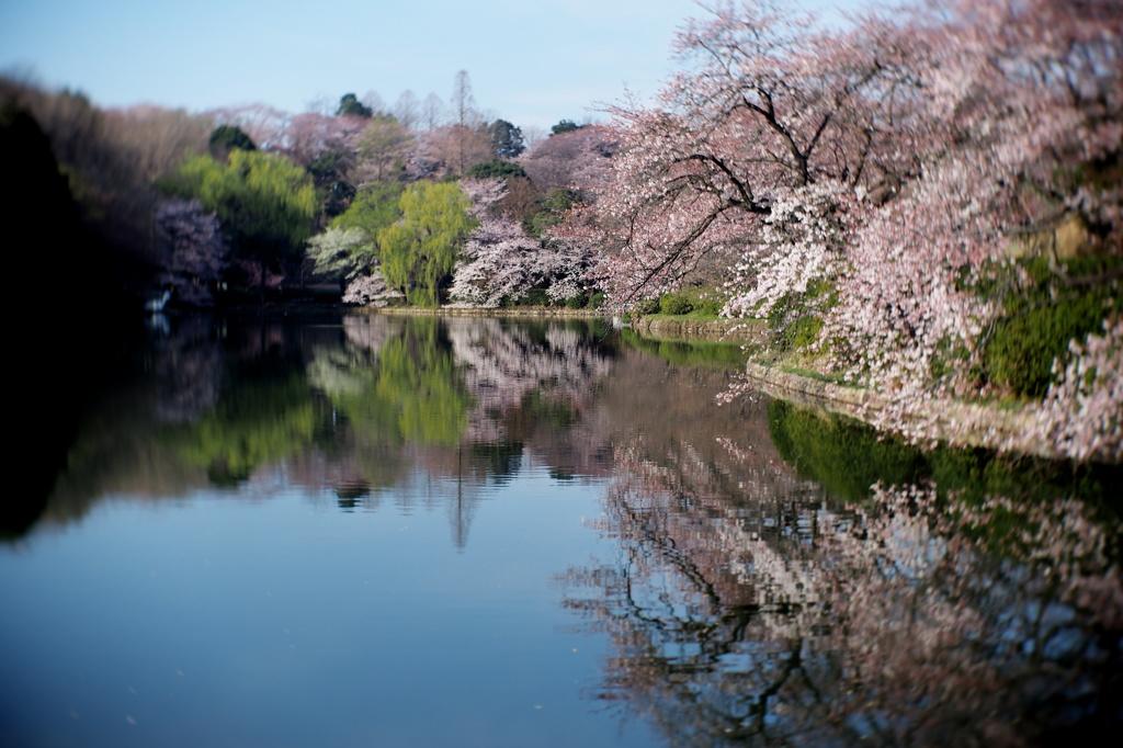 春の三ツ池公園