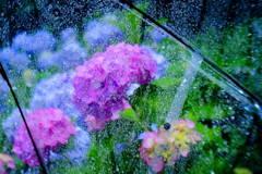 梅雨の日に2