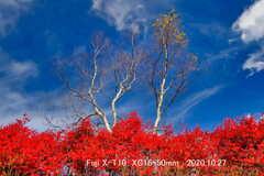 秋深い赤城山1