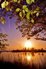 曽根沼の葉桜夕日