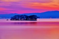 夕幻の水中木