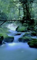 渓流の朝景