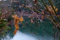 枝木の雨滴