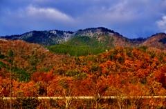 晩秋の湖西の山