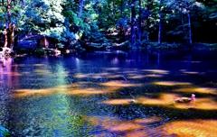 木漏れ日の朱雀池