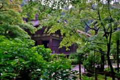 深緑の金剛輪寺本堂