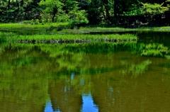 初夏の平池