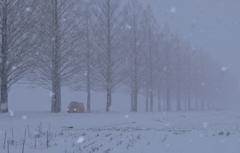 雪中メタセコイア並木道