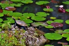 高源寺の池