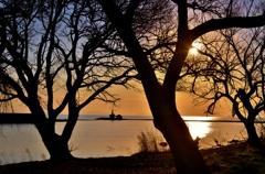 水辺の樹影