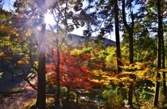 山間の光条紅葉