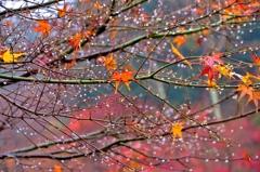 残り紅葉雨滴花