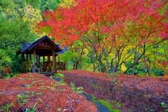 秋の一服処