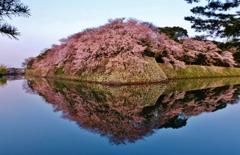 映る濠端桜花