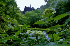 梅雨花の三重塔