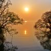 木の芽の朝日