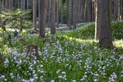 森の中の花畑