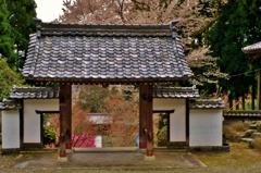 酒波寺山門から朱大門桜