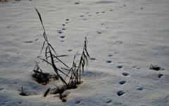 白銀の足跡