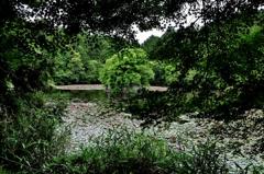 新緑樹木弁天池