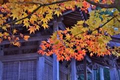 移り行く秋