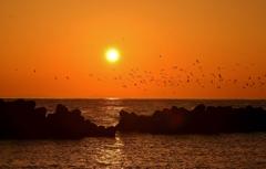 群れ鳥夕日