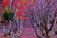 晩秋の鶏足寺参道