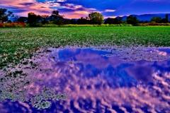 水草に朝雲映して