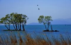 水中木春景
